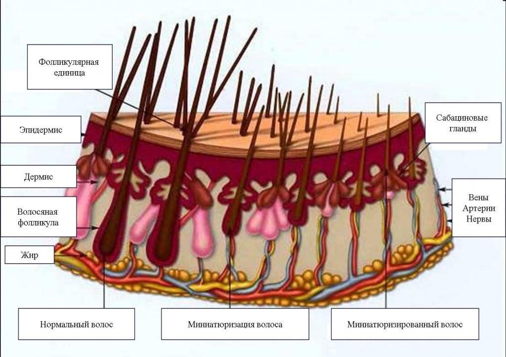 Миниатюризация волос.jpg